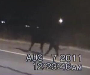 Where Was Animal Control When This Bull Got Loose?